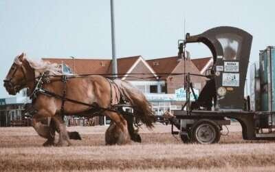 Workhorse of the Fleet – Hino 195